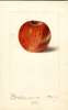 Apples, Bethel (1899)