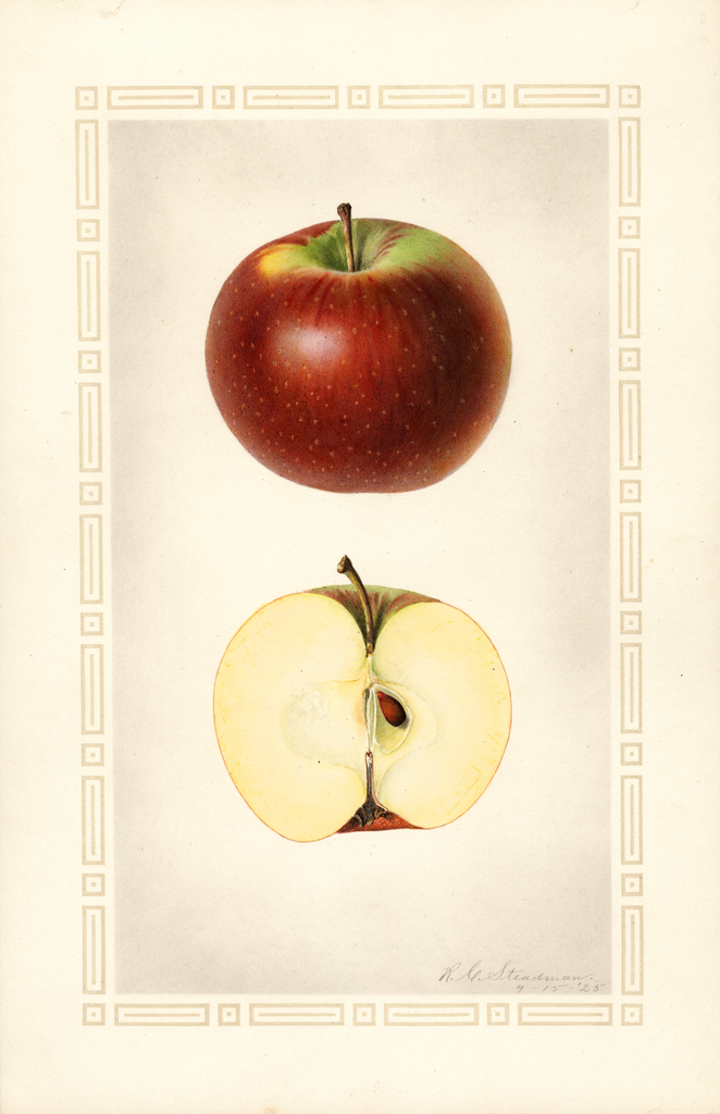 Apples, Black Annette (1925)