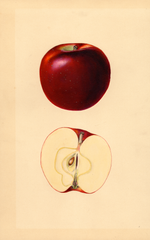 Apples, Blackjou (1933)