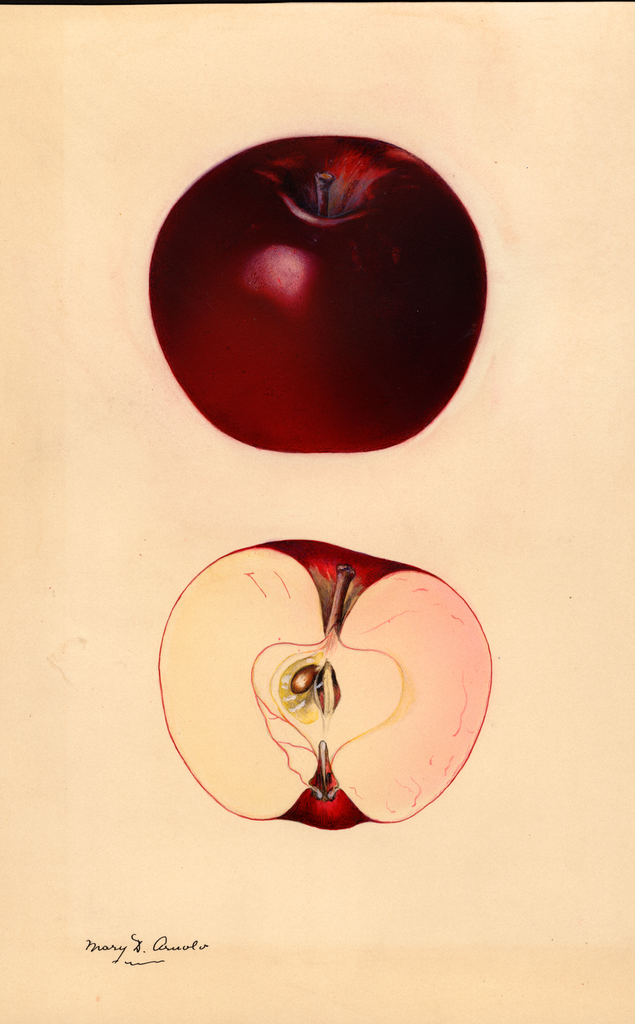 Apples, Black Winesap (1931)