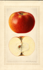 Apples, Blenheim (1922)