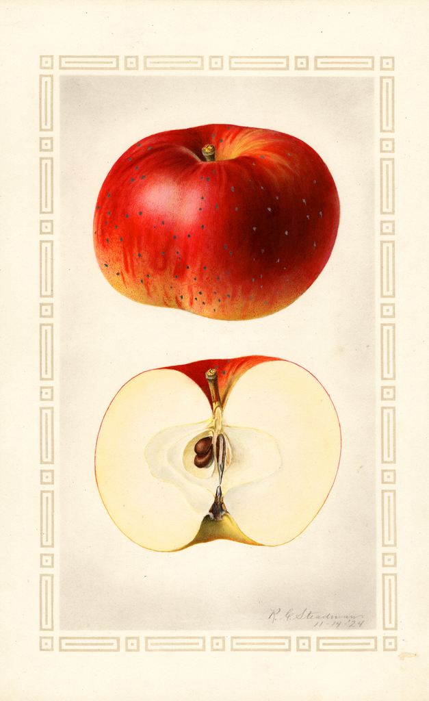 Apples, Bughorn (1924)