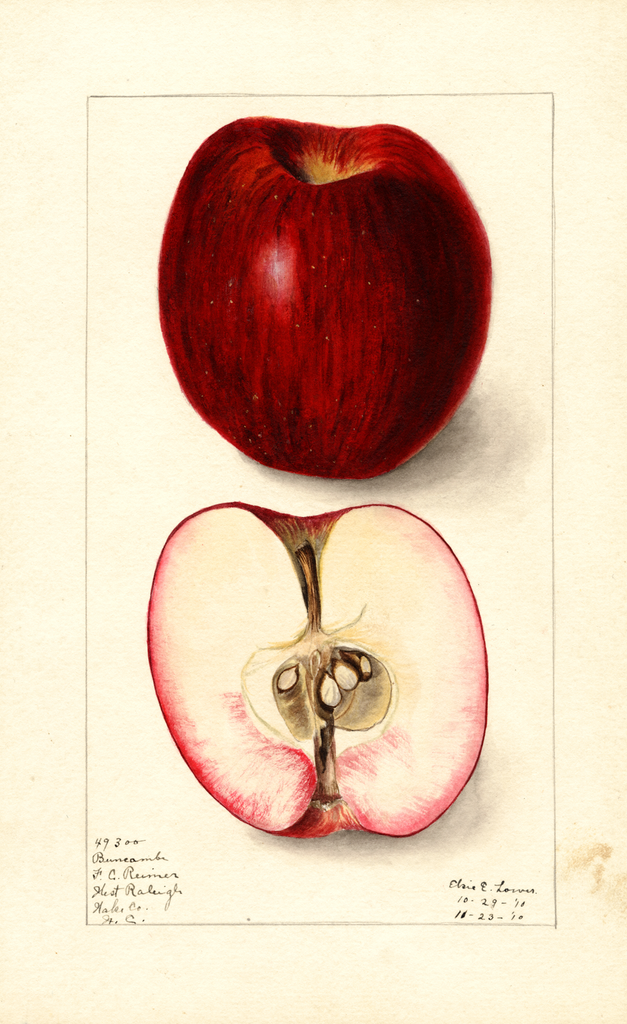 Apples, Buncombe (1910)