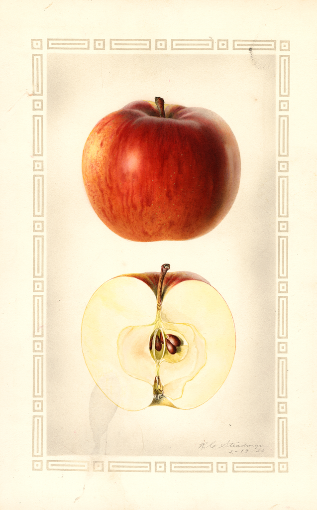 Apples, Brock (1930)