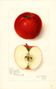 Apples, Cooper Market (1910)