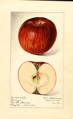 Apples, Chicago (1915)