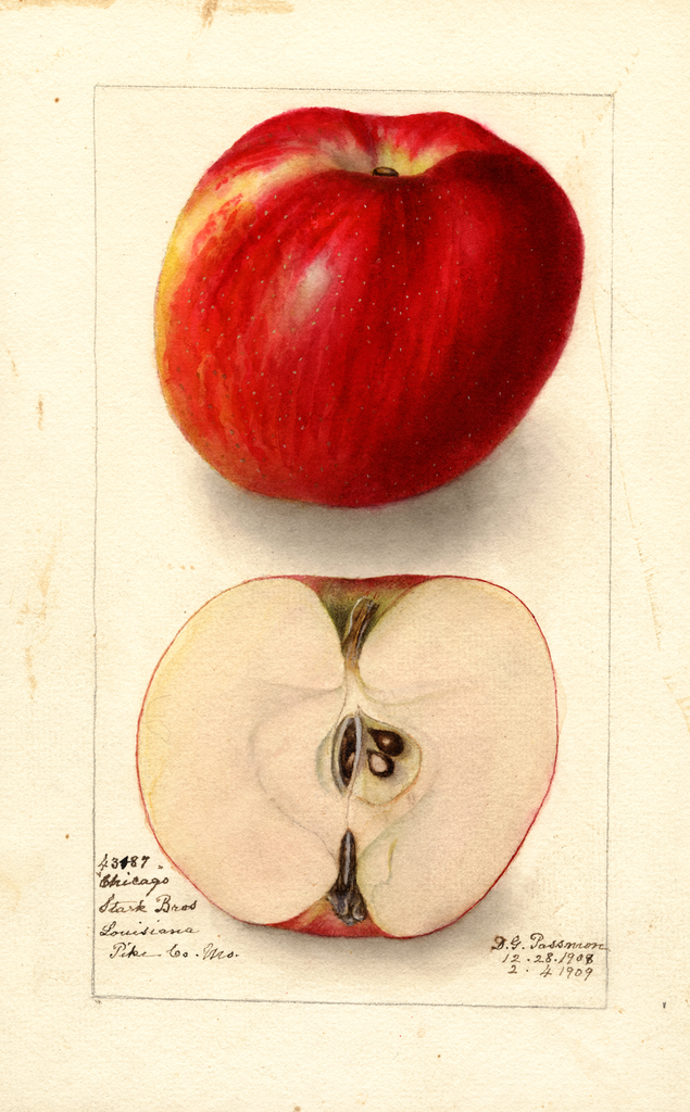 Apples, Chicago (1909)