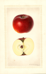 Apples, Clawis (1926)