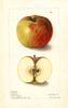 Apples, Clayton (1905)