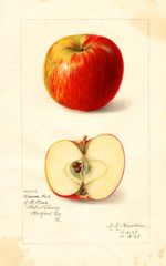 Apples, Cleever Red (1909)