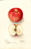 Apples, Clemons (1908)