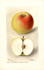 Apples, Catherine (1898)