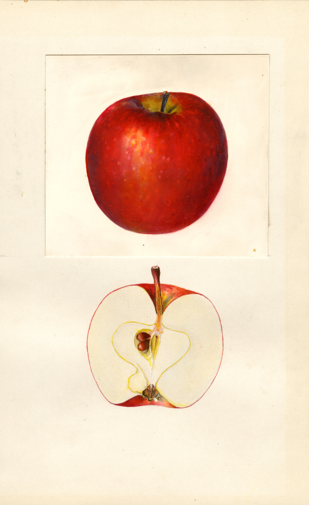 Apples, Cellina (1939)