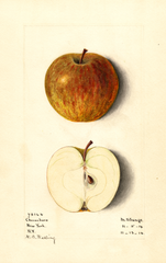 Apples, Cheeseboro (1914)