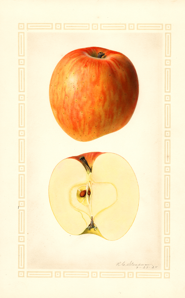 Apples, Cliff (1925)