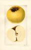 Apples, Cloth Of Gold (1929)