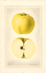 Apples, Cloth Of Gold (1924)