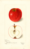 Apples, Columbus (1898)