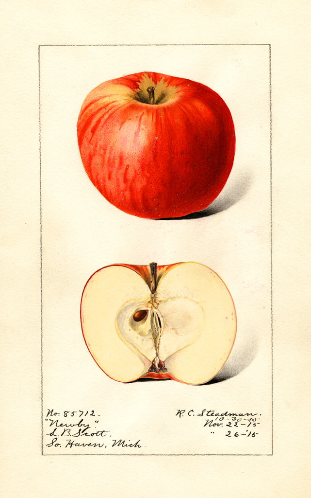 Apples, Newby (1915)