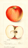 Apples, Doctor; No. 1 (1899)