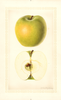 Apples, Lucinda (1926)