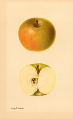 Apples, Lucinda (1931)