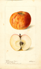 Apples, Coxs Orange Pippin