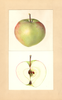 Apples, Professor C.p. Close Seedling (1935)
