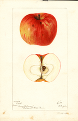 Apples, Creek (1897)