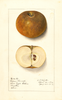Apples, Golden Russet (1912)