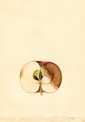 Apples, Deleware Red (1918)