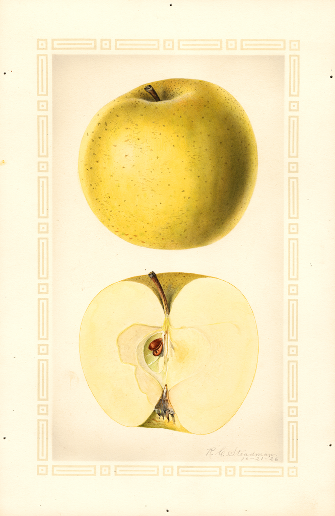 Apples, Fall Pippin (1926)