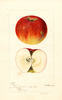Apples, Gordon (1896)