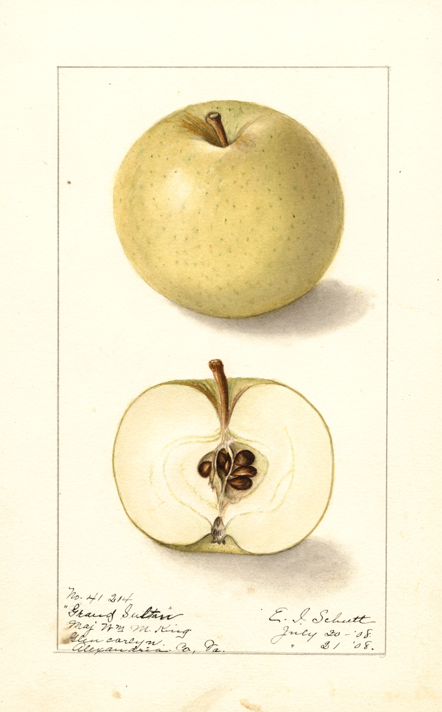 Apples, Grand Sultan (1908)