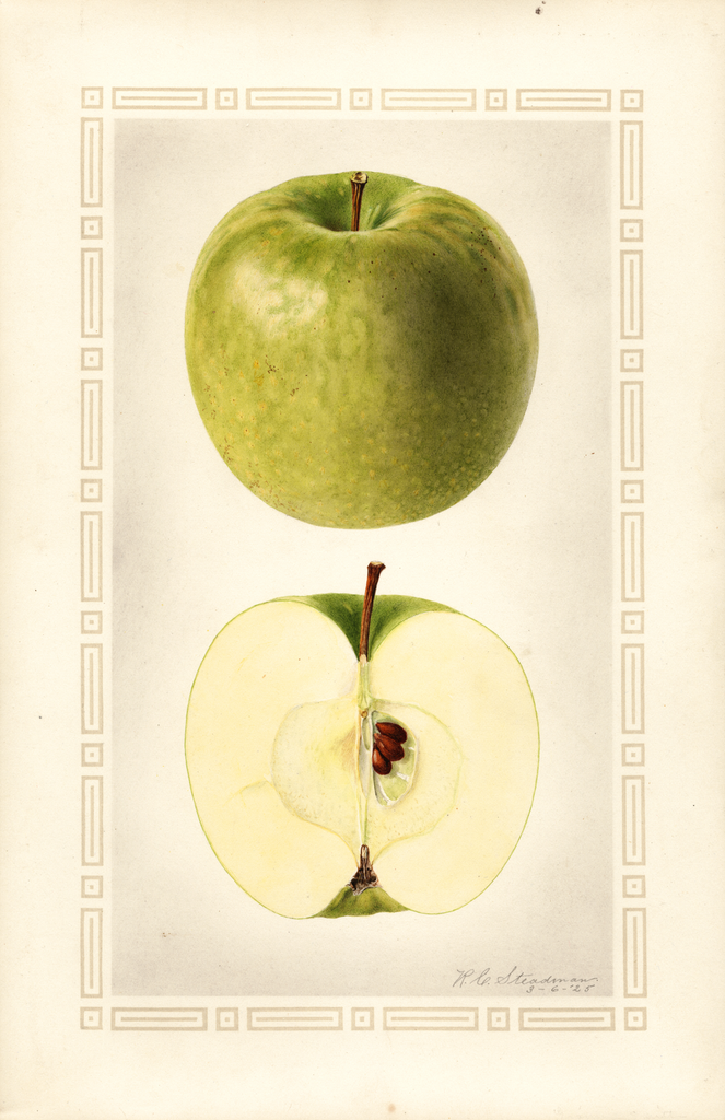 Apples, Granny Smith (1925)