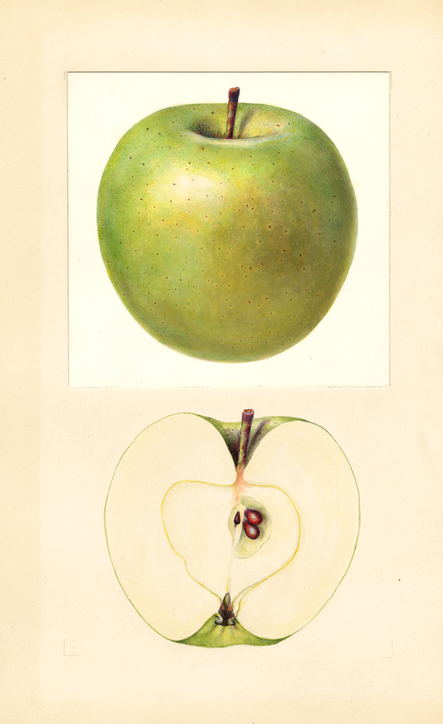 Apples, Granny Smith (1933)