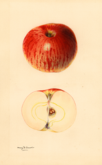 Apples, Gravenstein (1931)