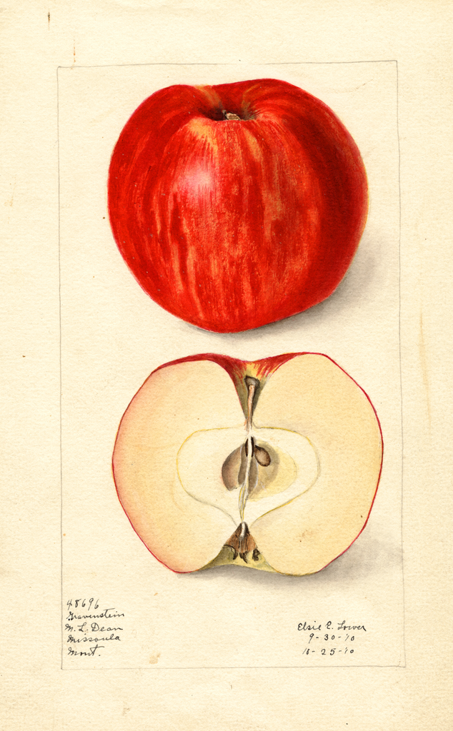 Apples, Gravenstein (1910)