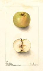 Apples, Green Cheese (1903)