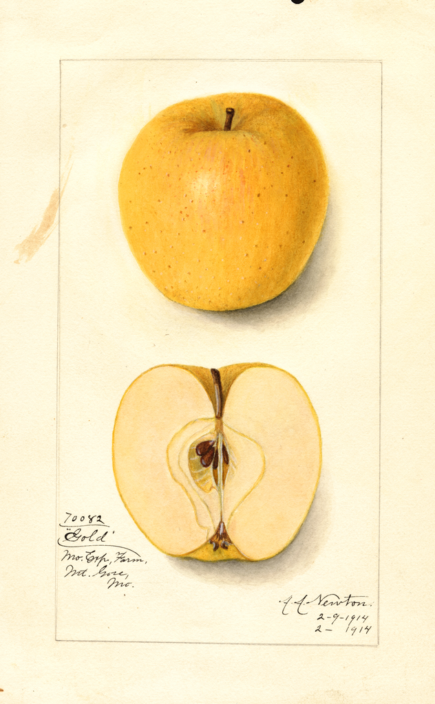 Apples, Gold (1914)