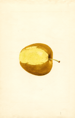 Apples, Golden Delicious (1937)