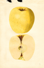 Apples, Golden Delicious (1935)