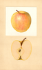 Apples, Golden Delicious (1934)