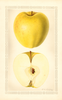 Apples, Golden Delicious (1929)