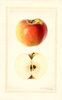 Apples, Golden Winesap (1926)