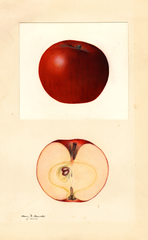 Apples, Delwine (1932)