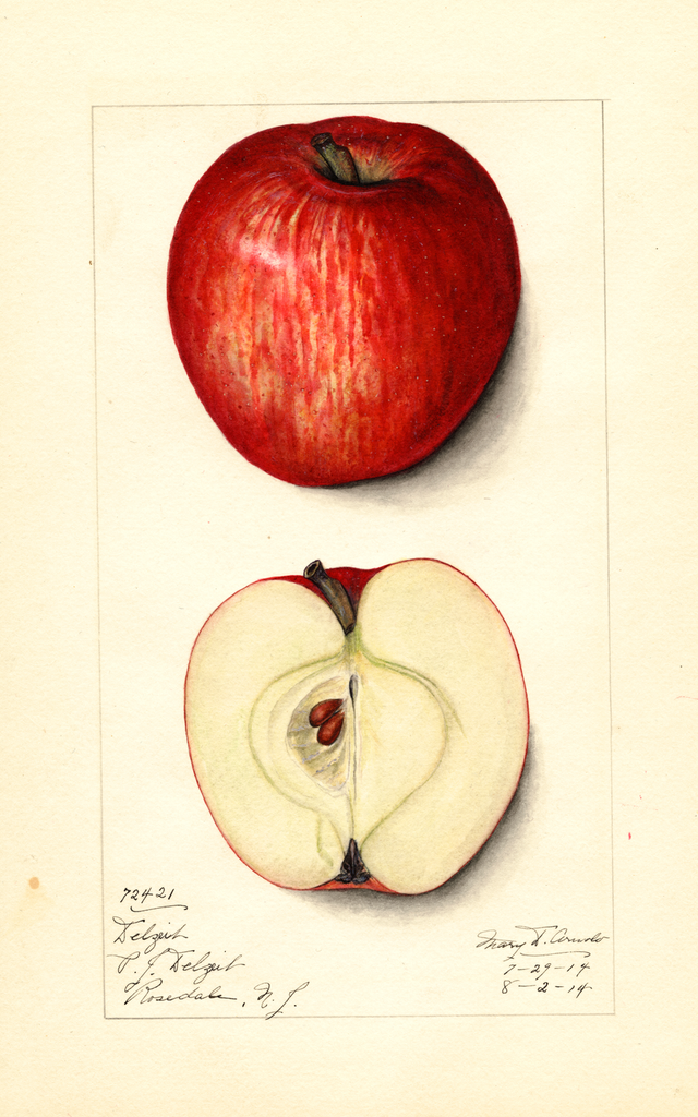 Apples, Delzeik (1914)