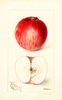 Apples, Denny (1898)