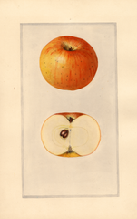 Apples, Dickey (1924)