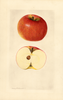 Apples, Dickey (1928)